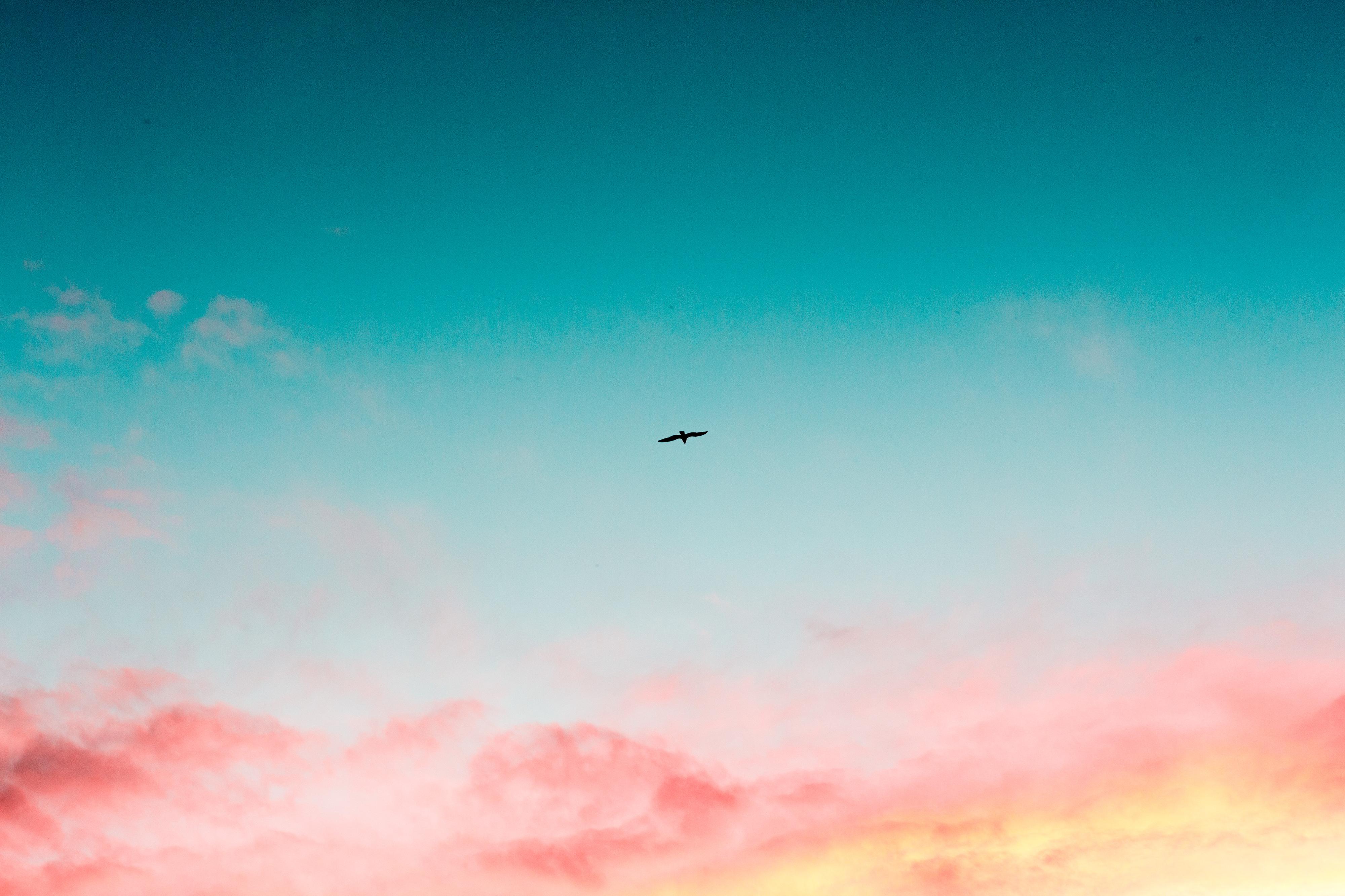 Ảnh background cánh chim giữa bầu trời