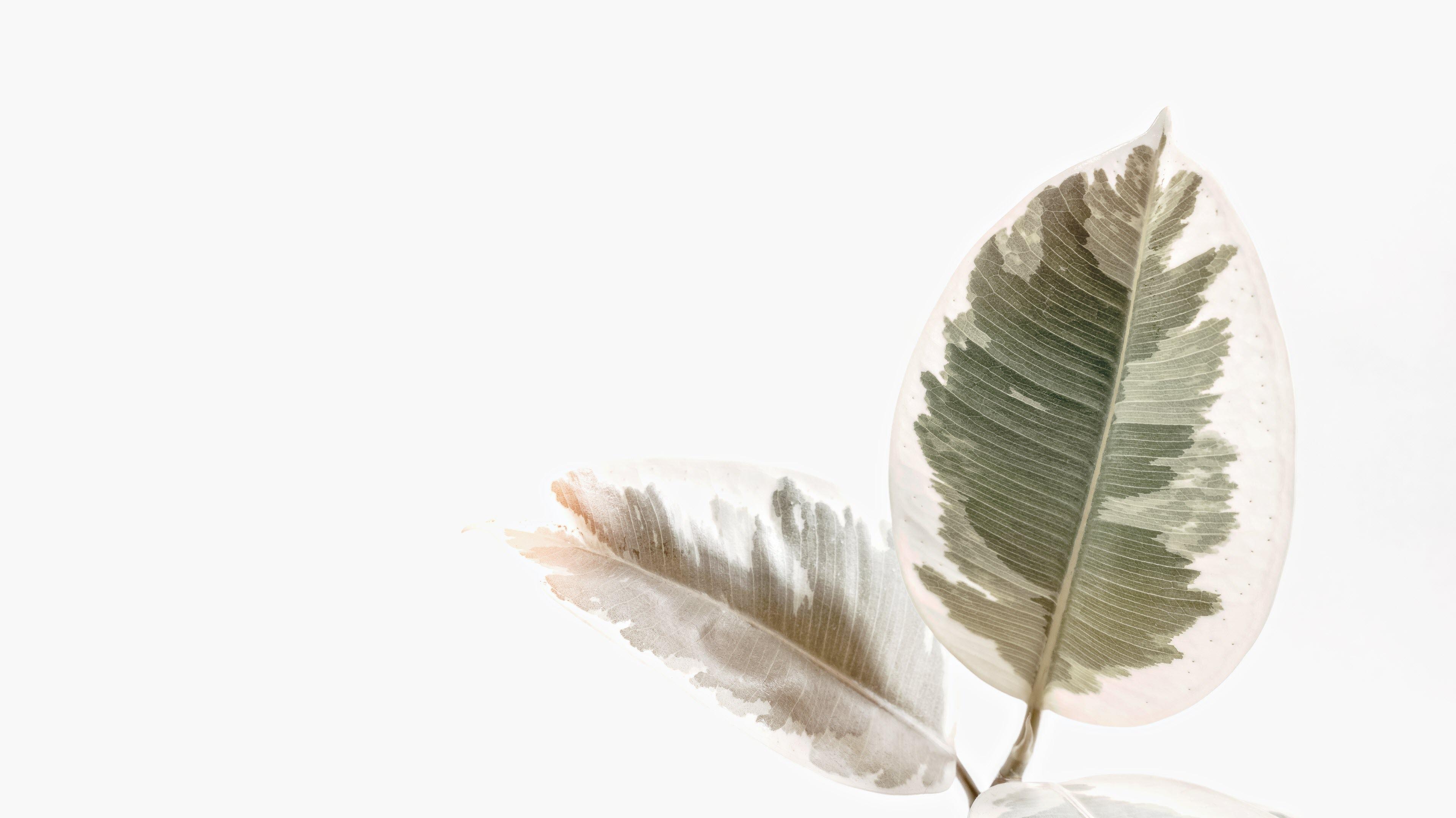 Hình nền màu trắng cực đẹp