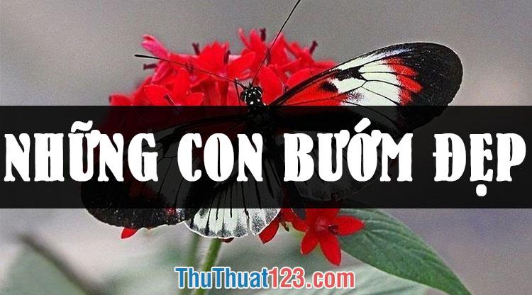 Những hình ảnh con bướm đẹp nhất