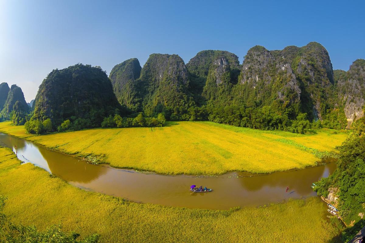 Ảnh cánh đồng lúa chín vàng đẹp nhất Việt Nam