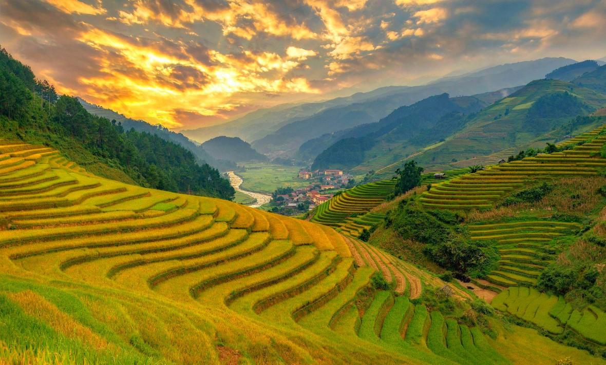 Cánh đồng lúa bậc thang chín vàng cực đẹp