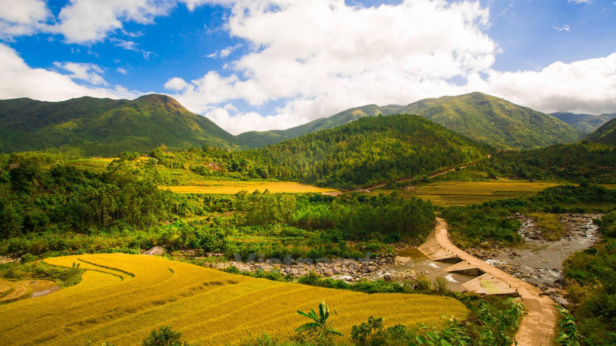 Cánh đồng lúa chín đẹp nhất Việt Nam