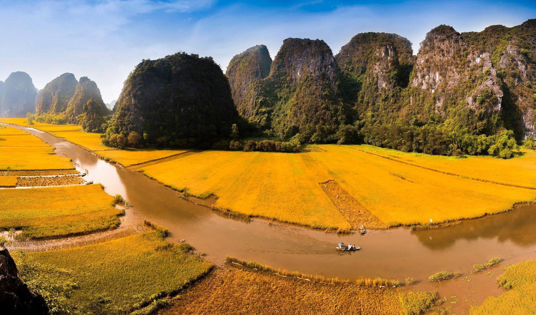 Cánh đồng lúa chín vàng đẹp