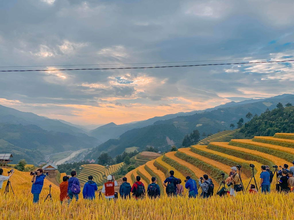 Cánh đồng lúa chín vàng Hà Giang