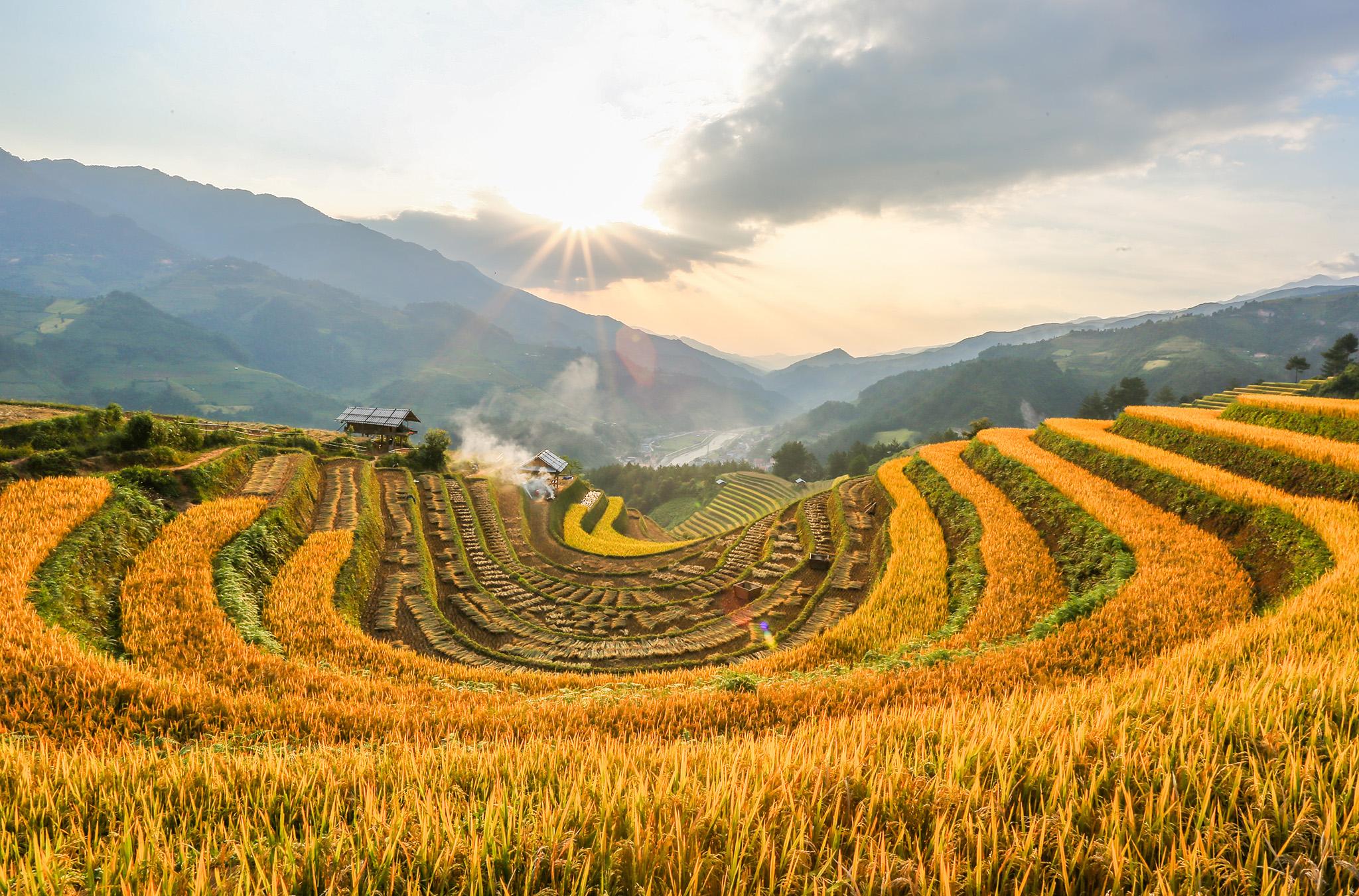 Hình ảnh cánh đồng lúa chín vàng Hà Giang