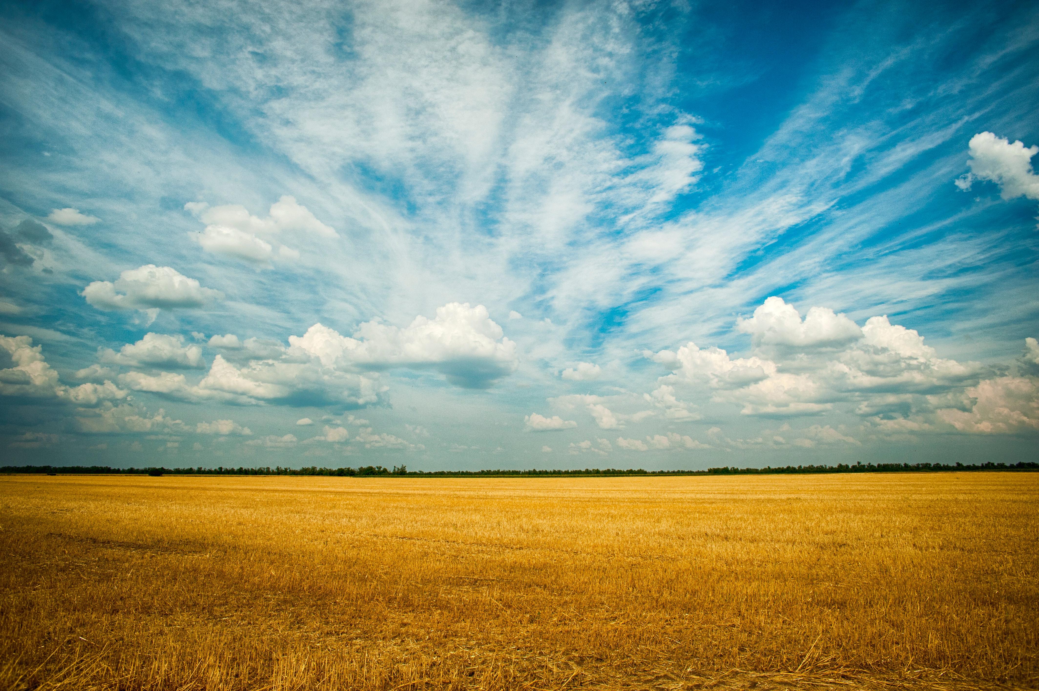 Hình ảnh cánh đồng lúa cực đẹp