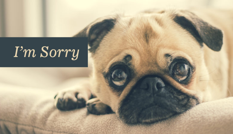 Hình ảnh xin lỗi dễ thương nhất