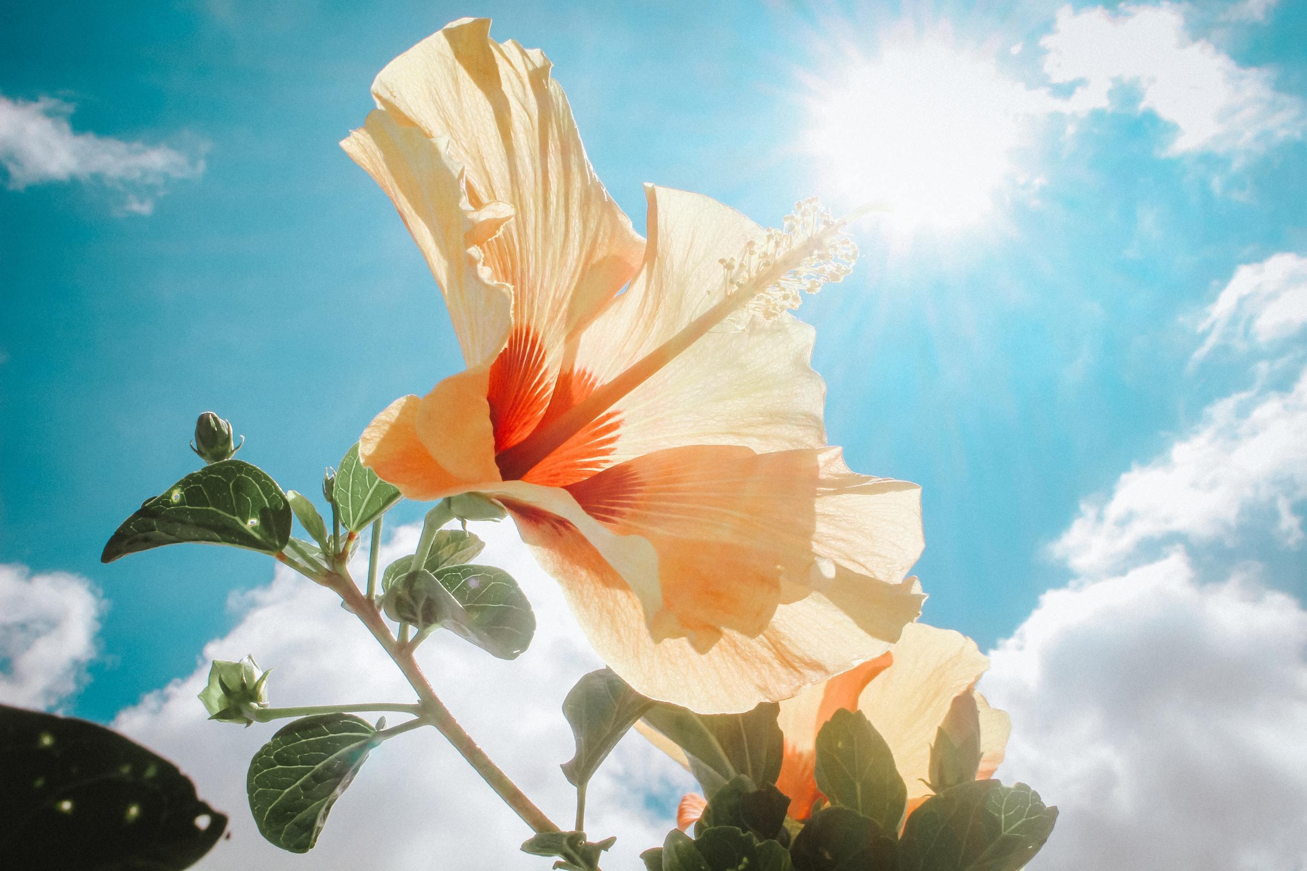 Ảnh bầu trời xanh nắng vàng cực đẹp