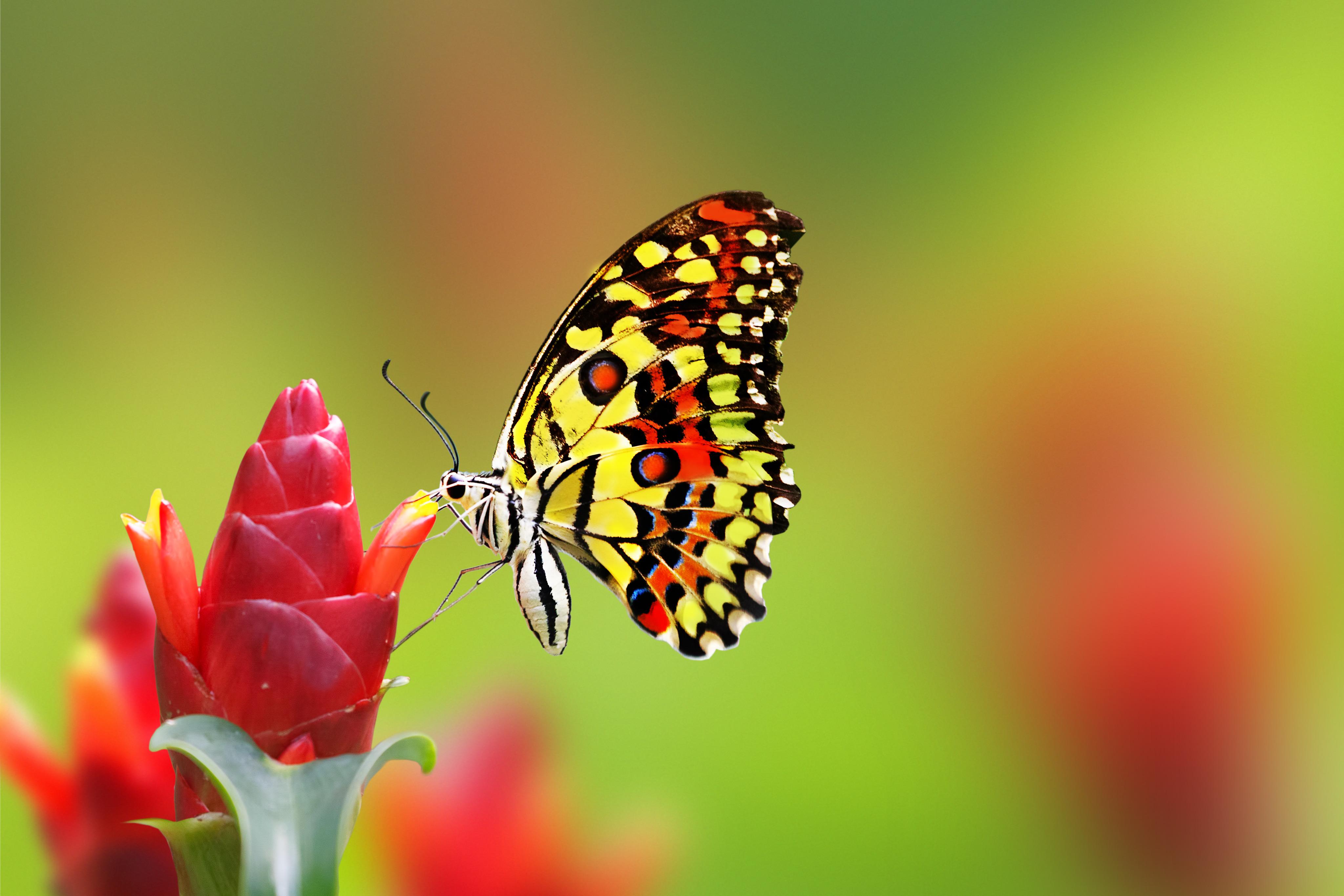 Ảnh cánh bướm hoa văn phức tạp cực đẹp