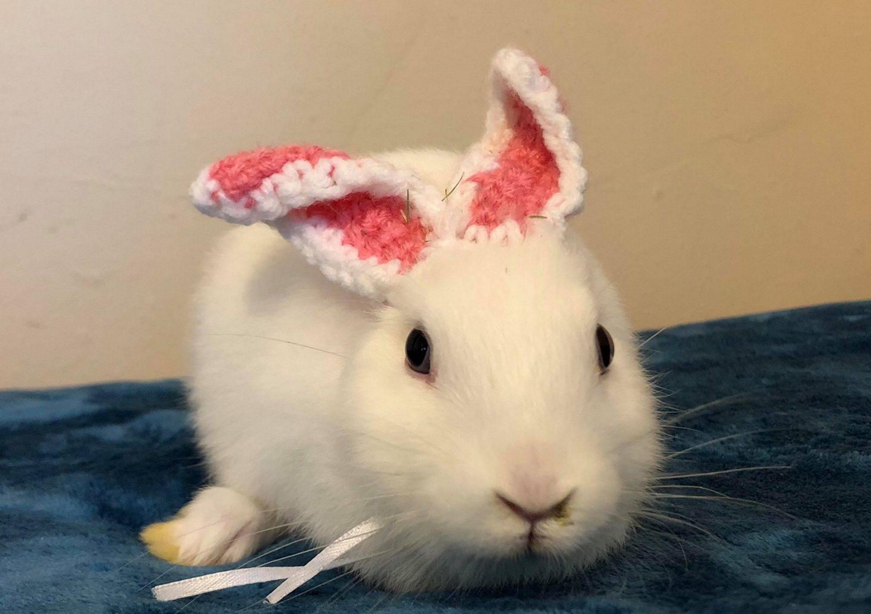 Ảnh em thỏ lông trắng đáng yêu đeo tai len