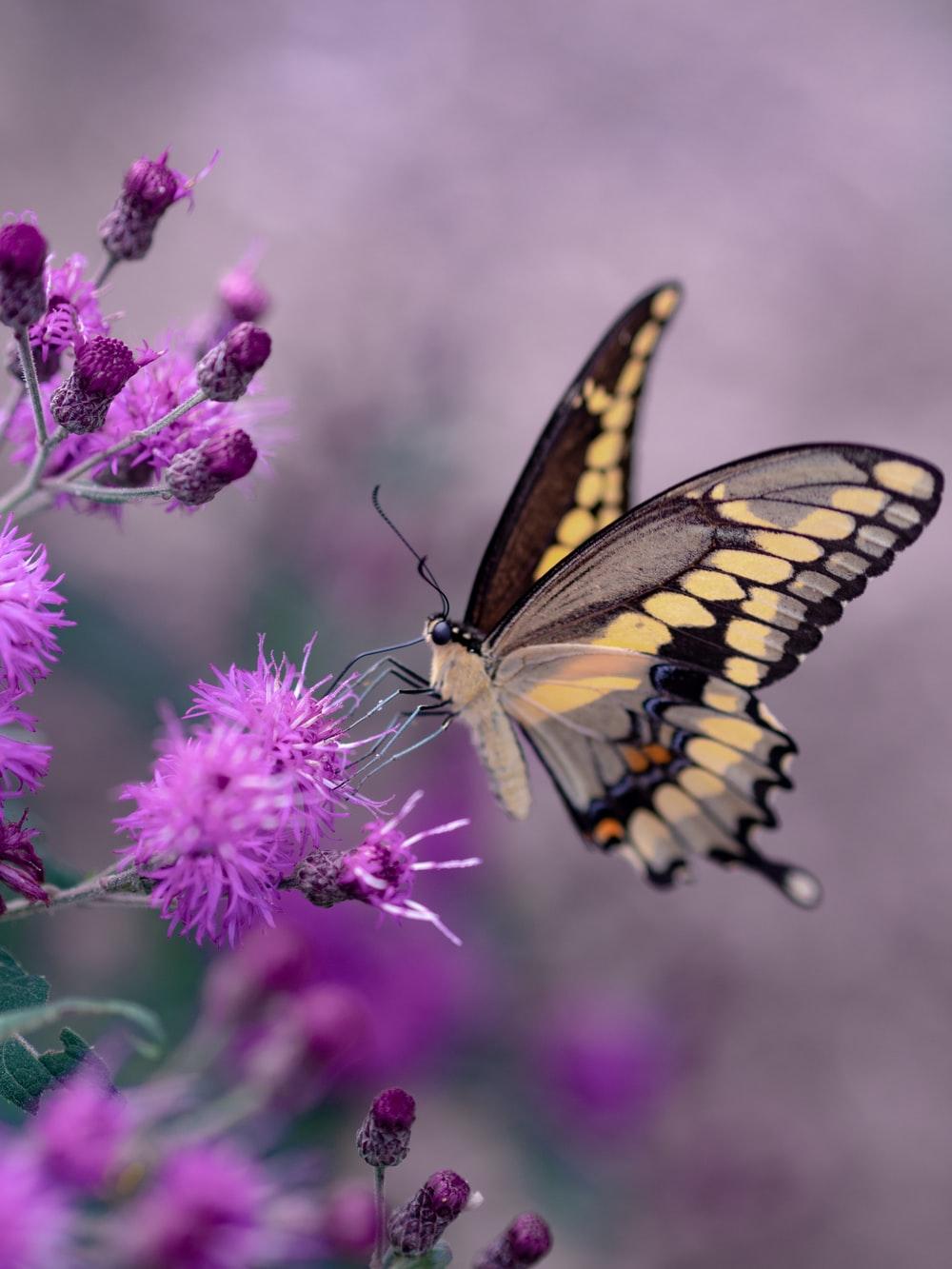 Bé bướm màu trầm rất xinh đẹp