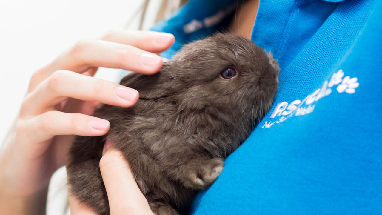 Bé thỏ lông đen rất xinh
