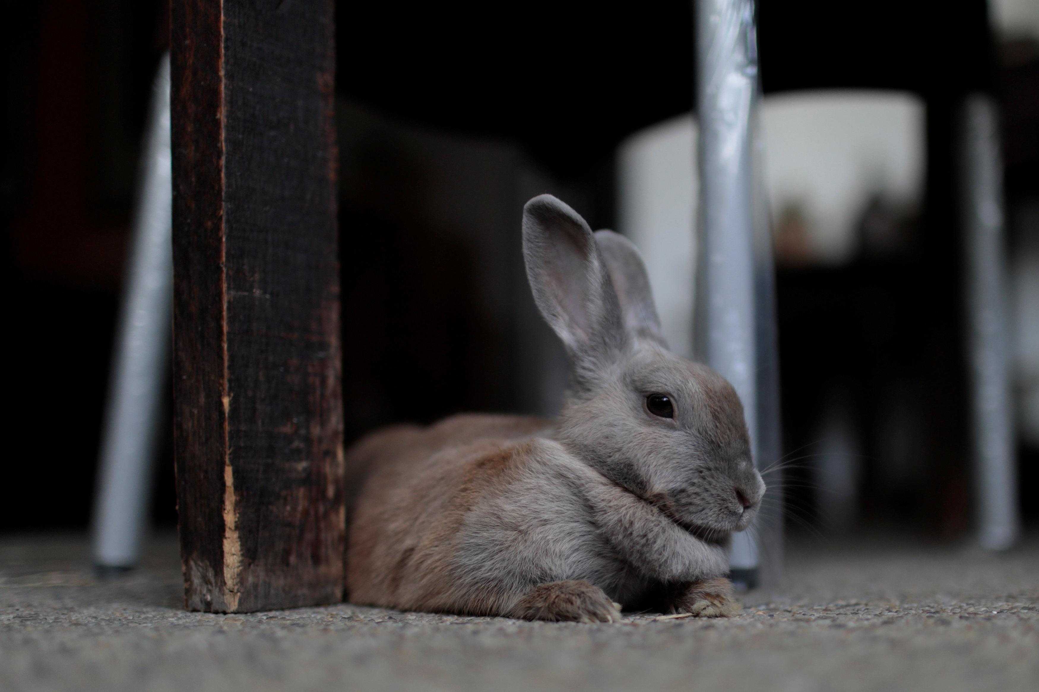 Bé thỏ xám cute