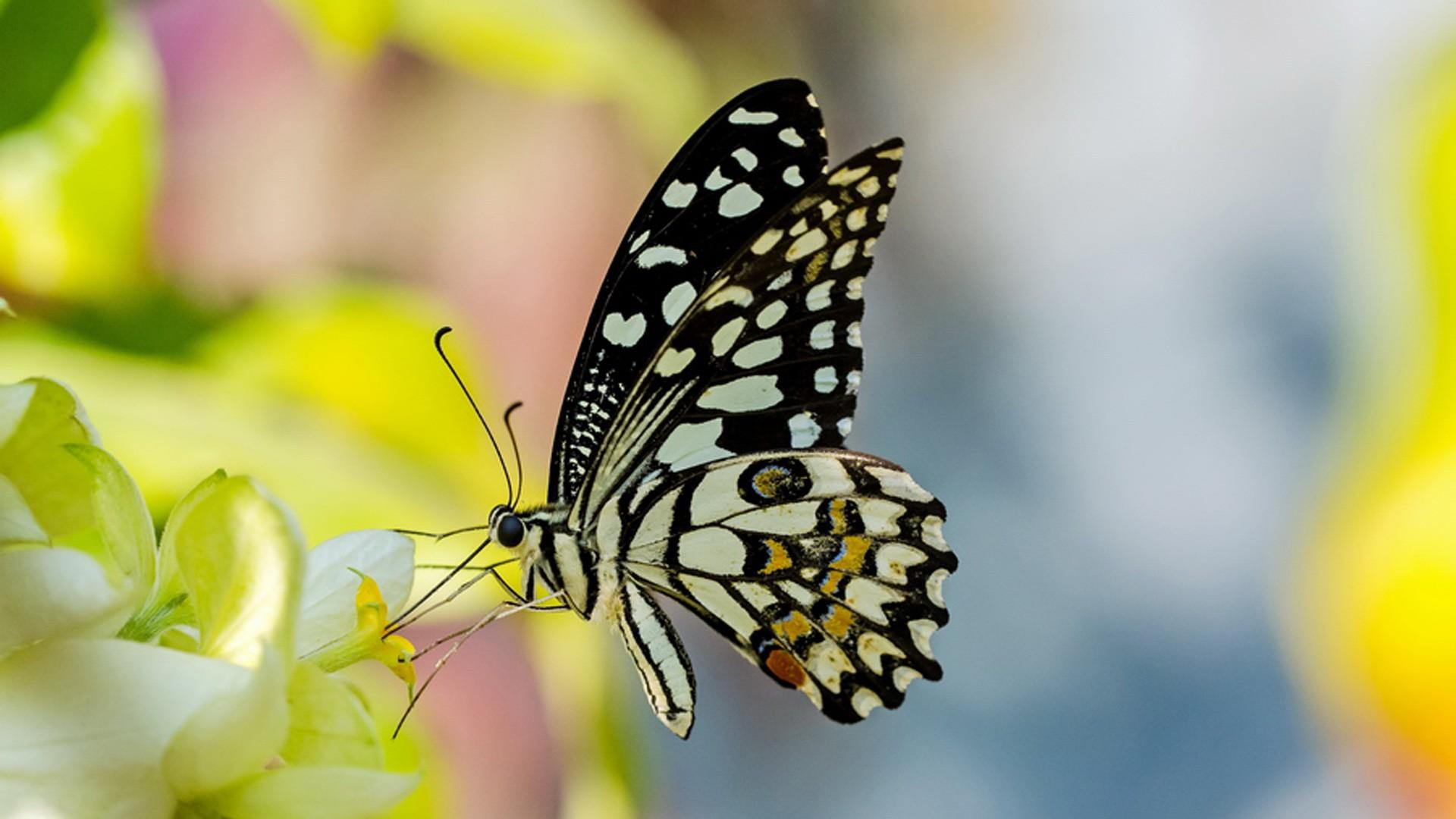 Cánh bướm rất đẹp