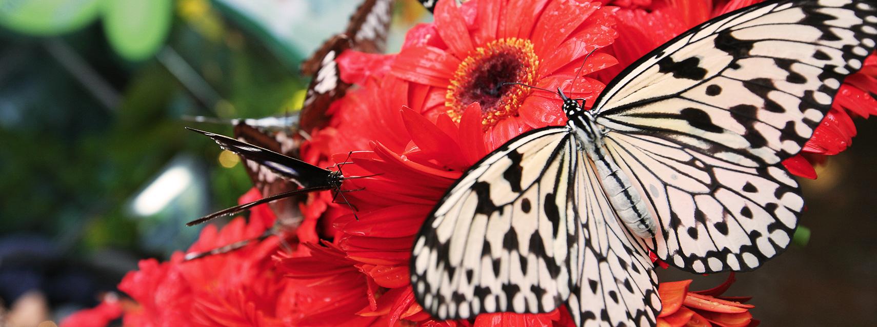 Cánh bướm trắng nhìn rất đẹp