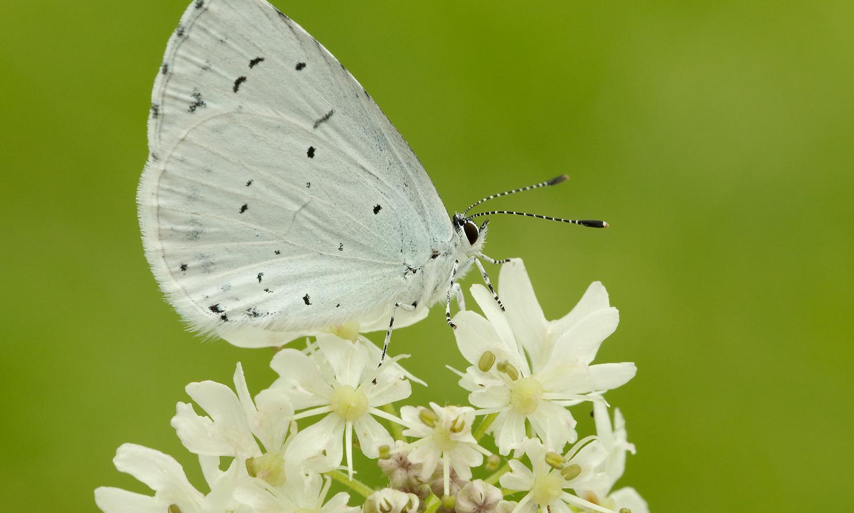Cánh bướm trắng rất xinh