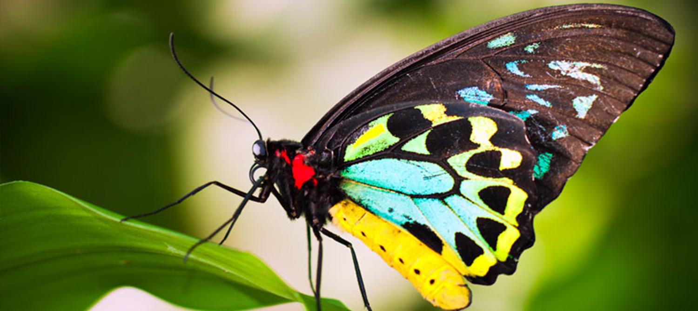 Chú bướm đẹp với màu sắc sặc sỡ