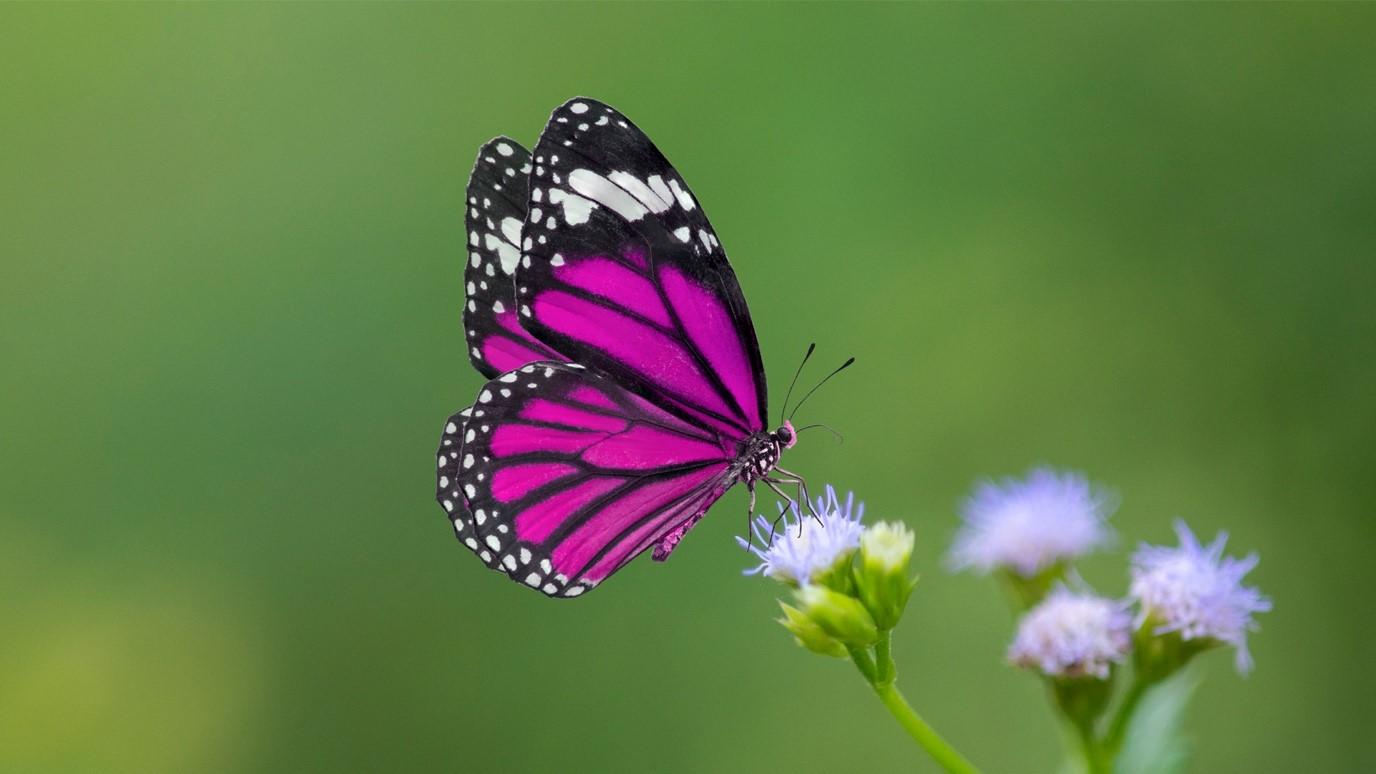 Chú bướm tím xinh xắn
