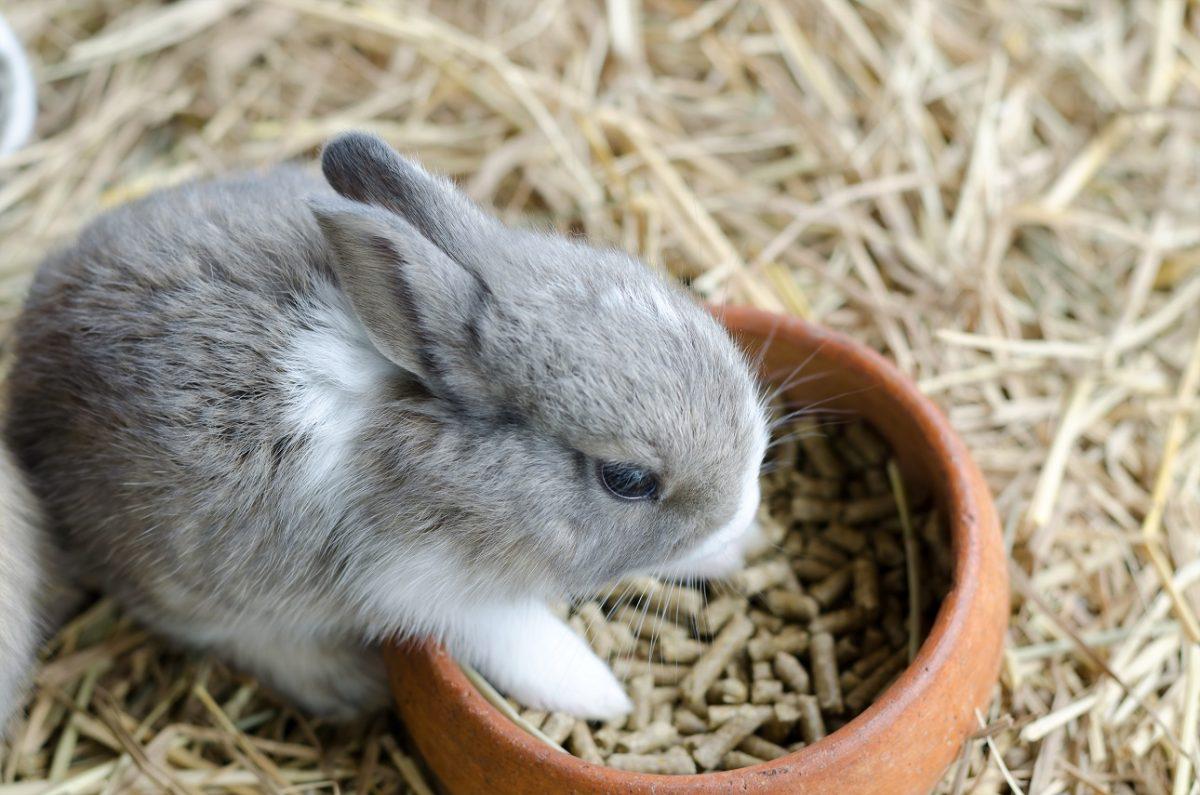 Chú thỏ lông xám lông mềm đáng yêu