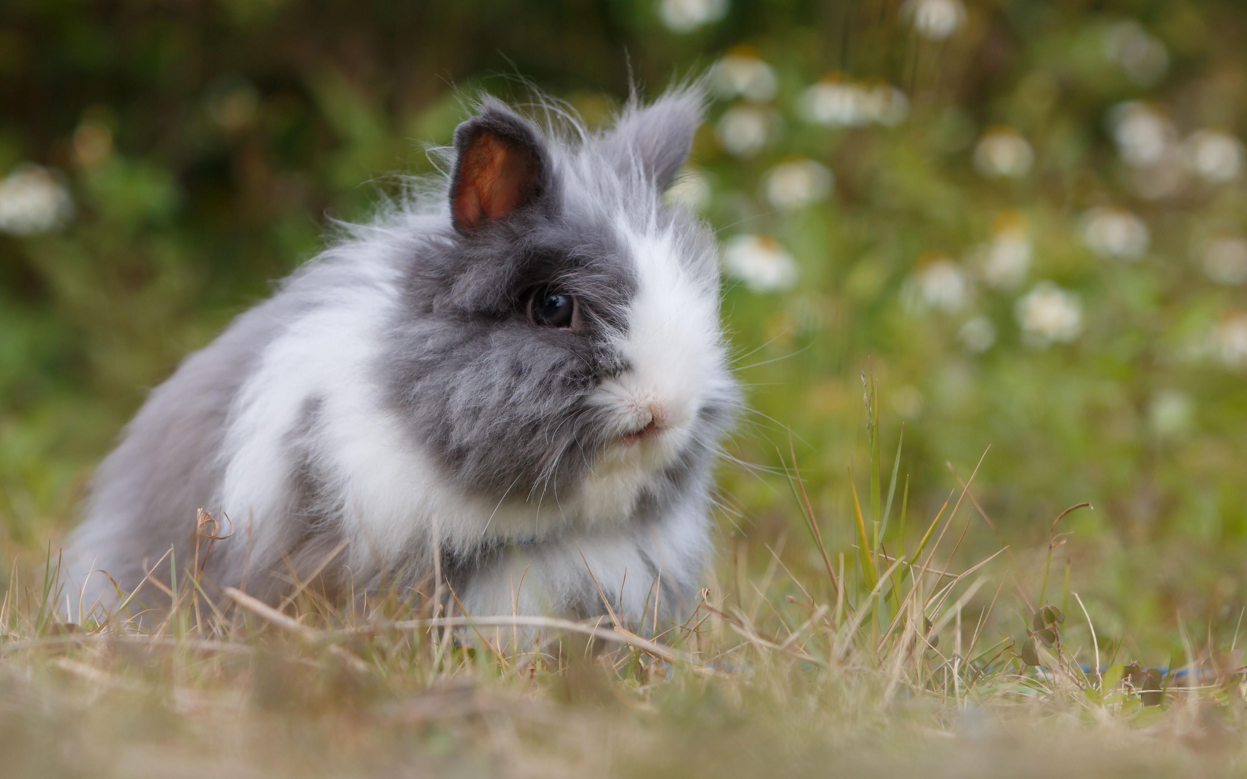 Chú thỏ lông xù xinh xắn
