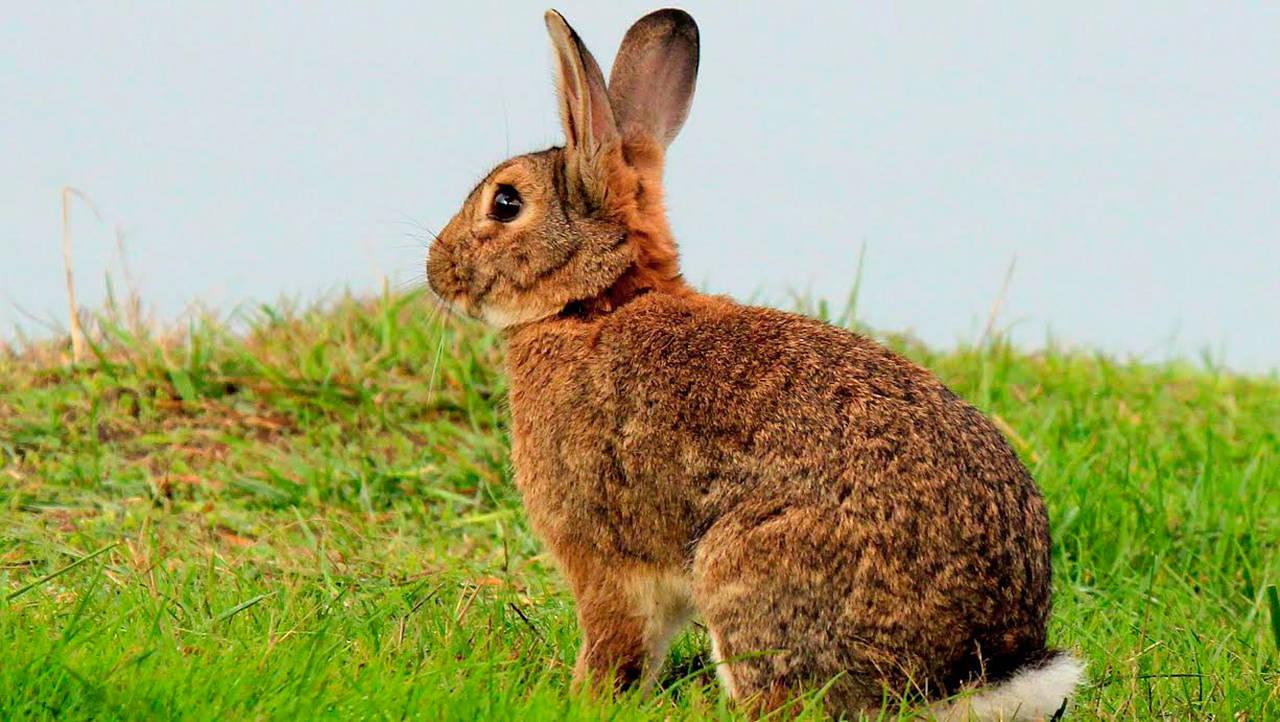 Chú thỏ nâu xinh đẹp đang quay lưng về phía ống kính