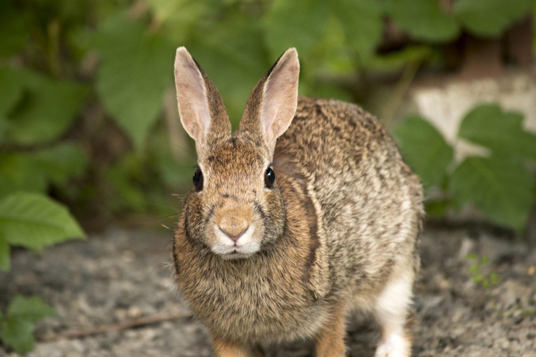 Chú thỏ xinh xắn đáng yêu