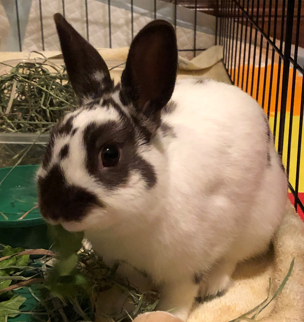 Em thỏ lông trắng vằn đen xinh xắn