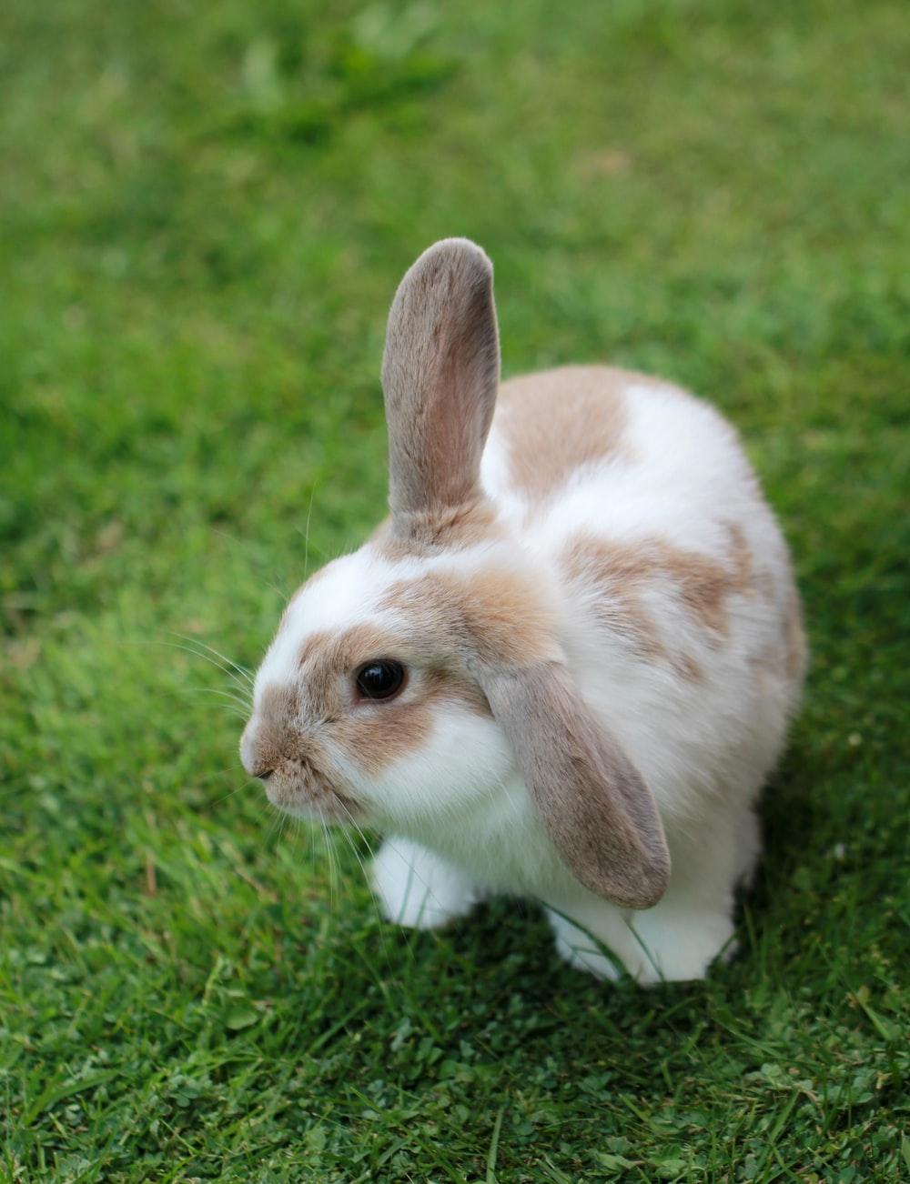 Em thỏ lông vằn đáng yêu xinh xắn