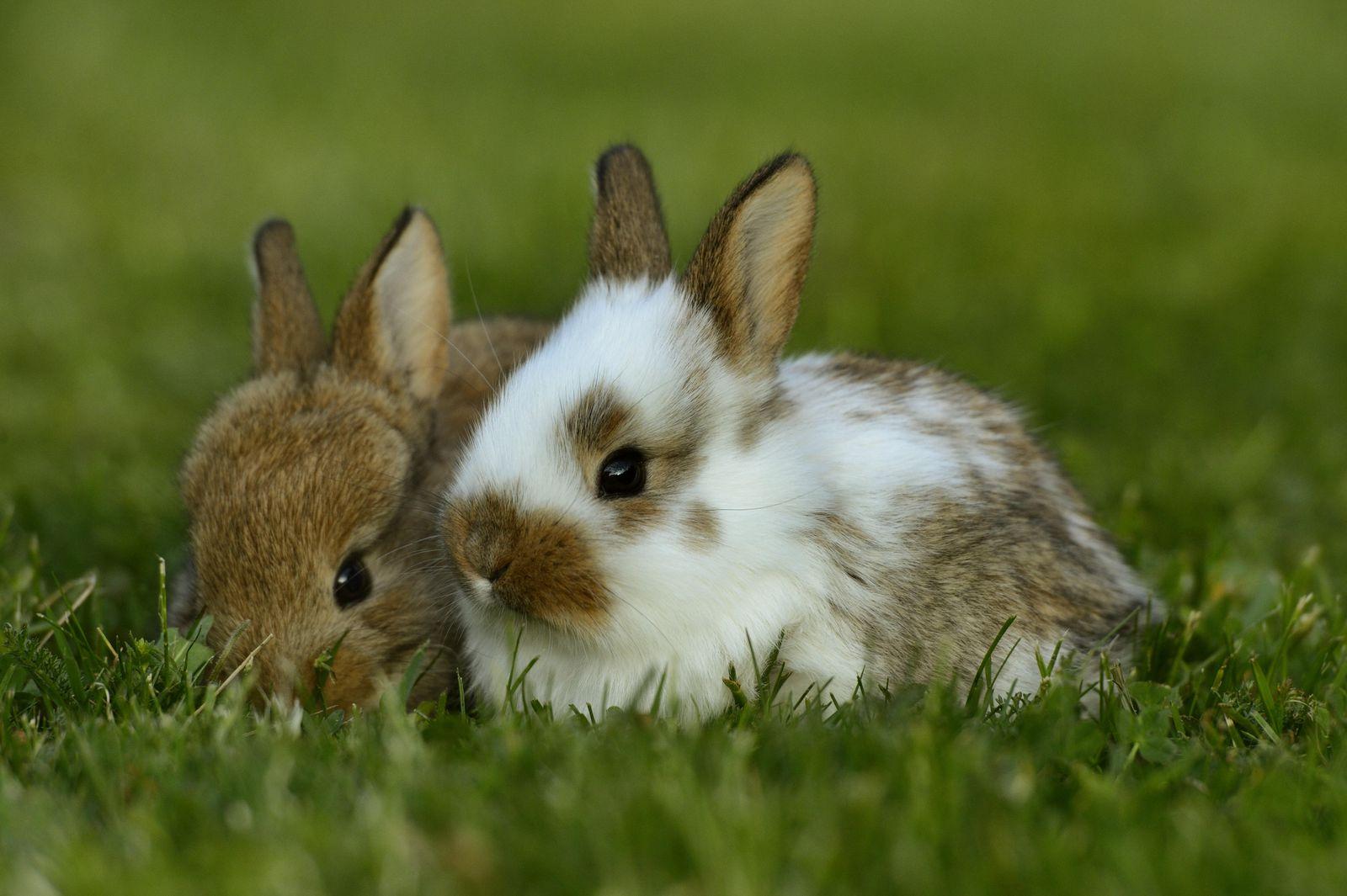 Hai chú thỏ con đáng yêu