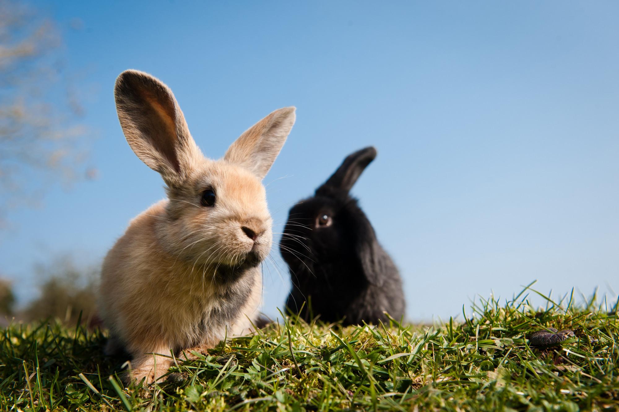 Hai em thỏ đáng yêu