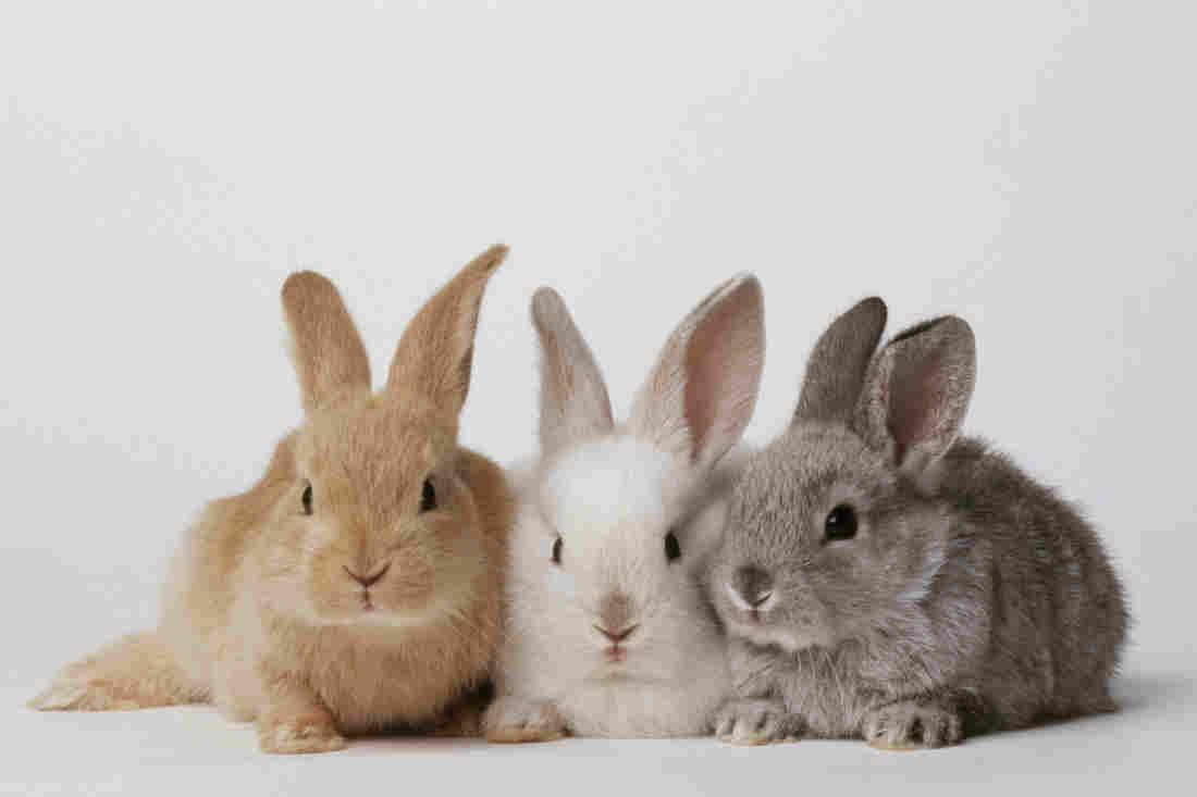 Hình ảnh ba chú thỏ ba màu khác nhau