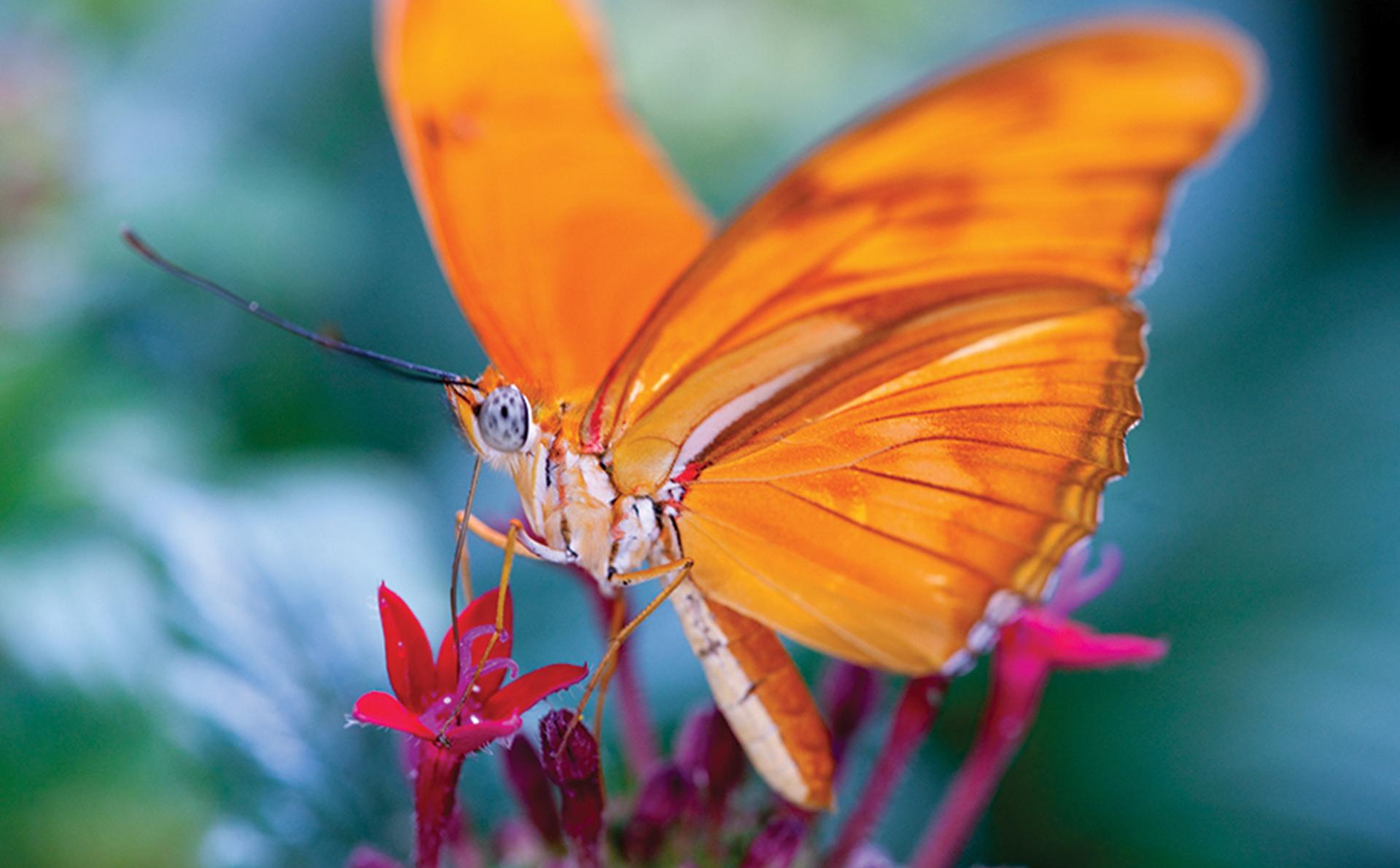 Hình ảnh bướm màu da cam rất đẹp