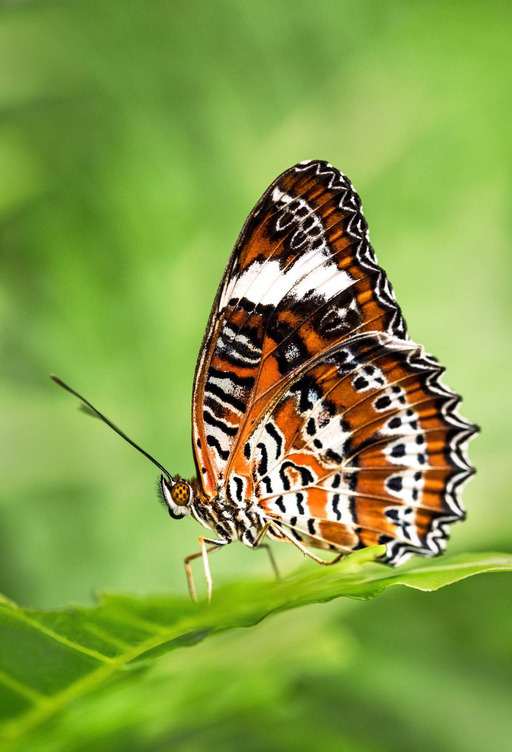 Hình ảnh bướm vằn rất đẹp