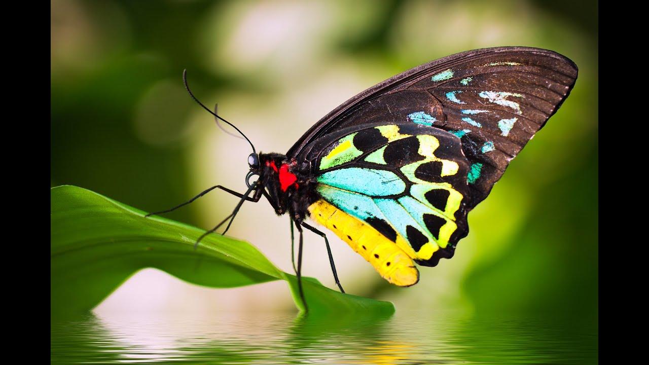 Hình ảnh cánh bướm xinh đẹp
