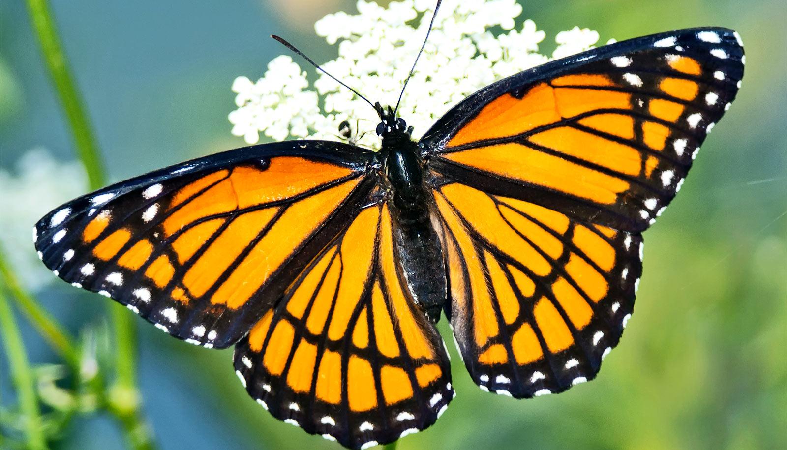 Hình ảnh chú bướm vàng nhỏ xinh