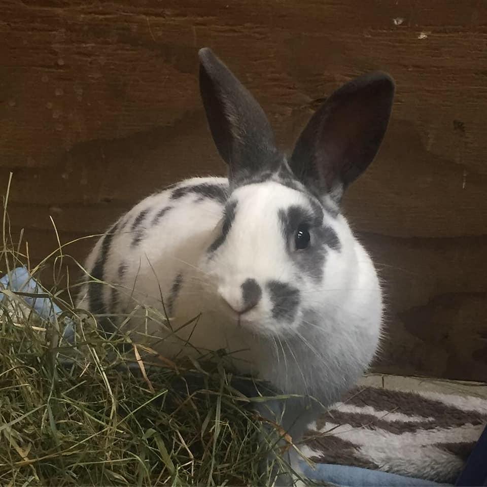 Hình ảnh chú thỏ xinh xắn
