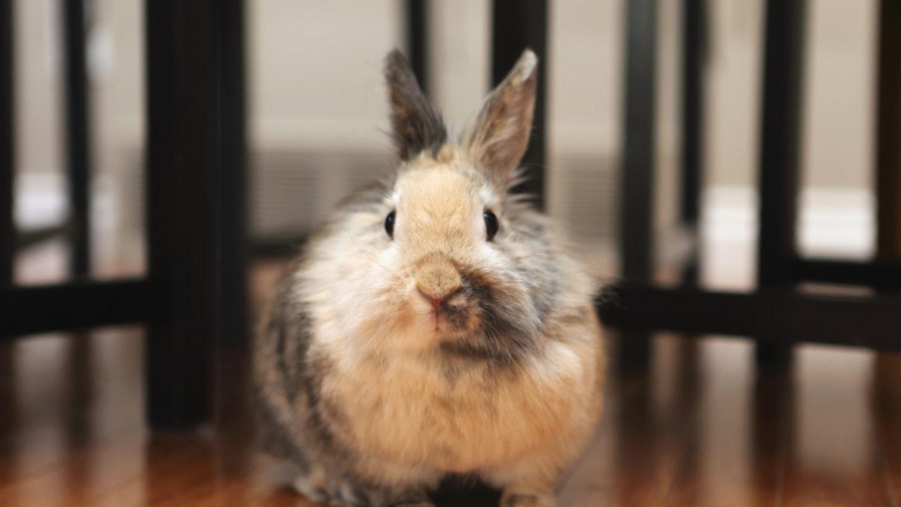 Hình ảnh em thỏ xinh xắn lông xù
