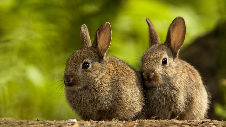 Hình ảnh hai chú chỏ lông xám cực kỳ xinh xắn