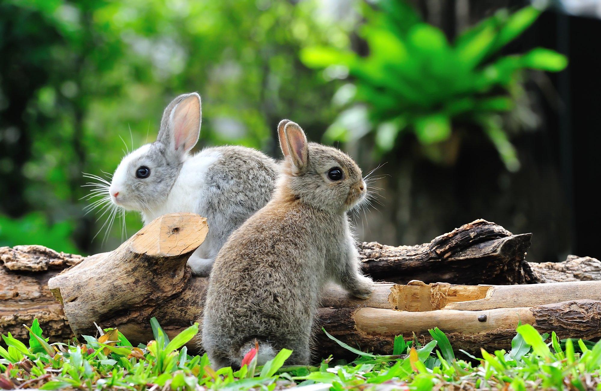 Hình ảnh hai chú thỏ cực xinh