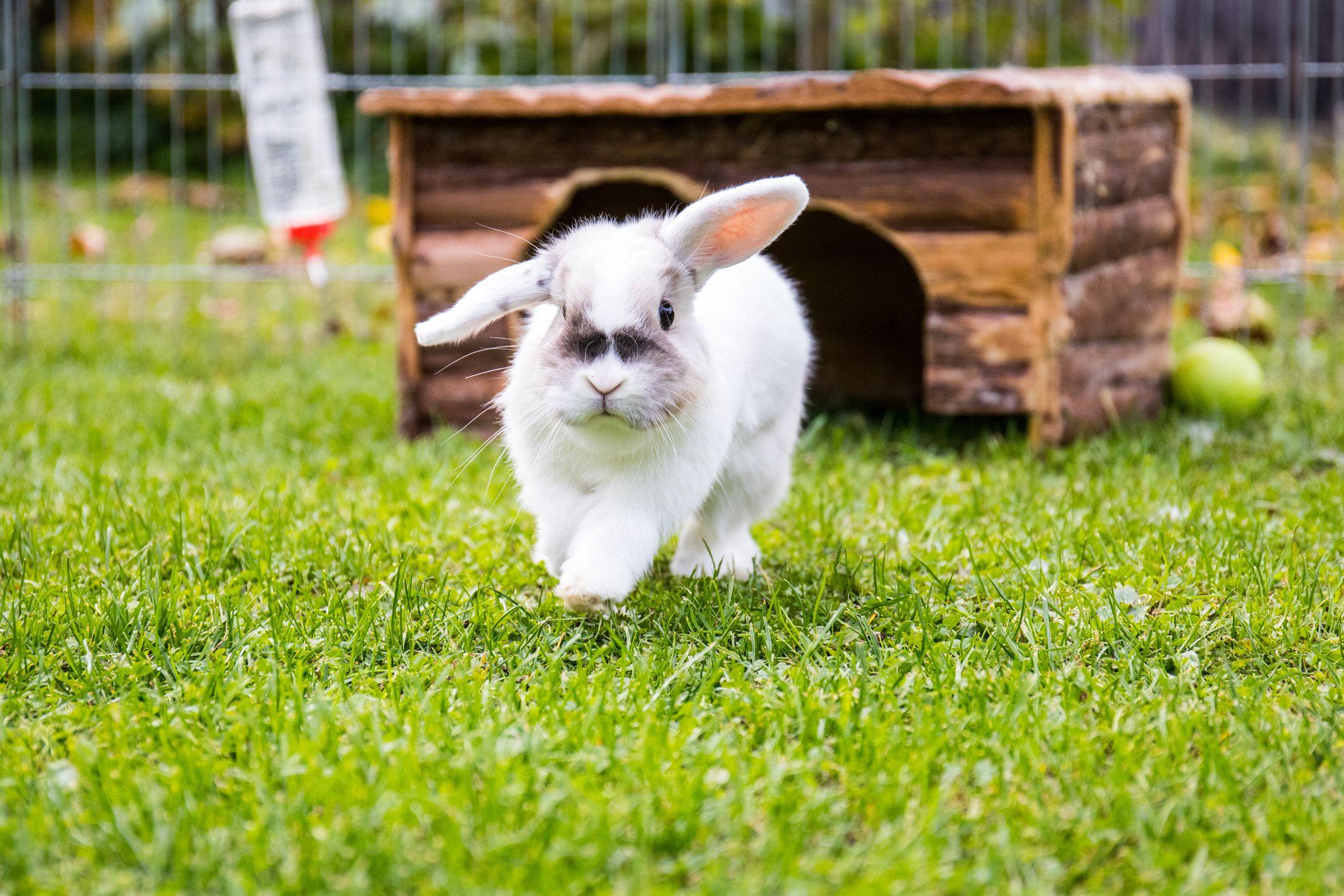 Hình ảnh thỏ con rất xinh xắn