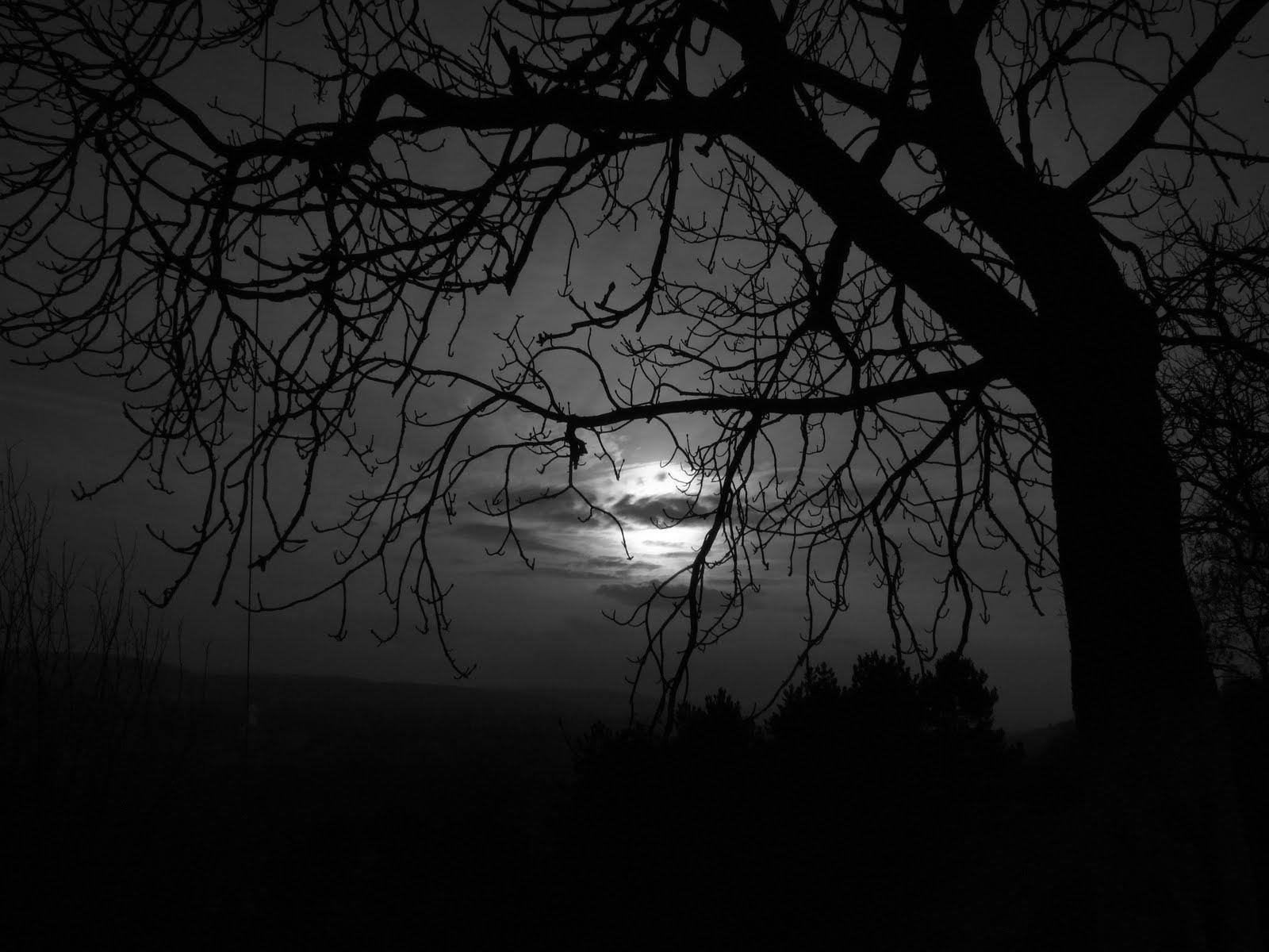 Hình nền đen tối cây cối ủ rũ buồn thiu