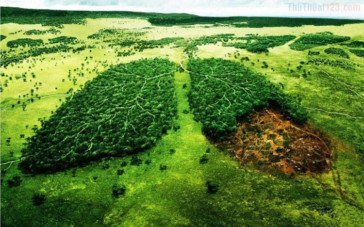 Những hình ảnh bảo vệ môi trường đẹp