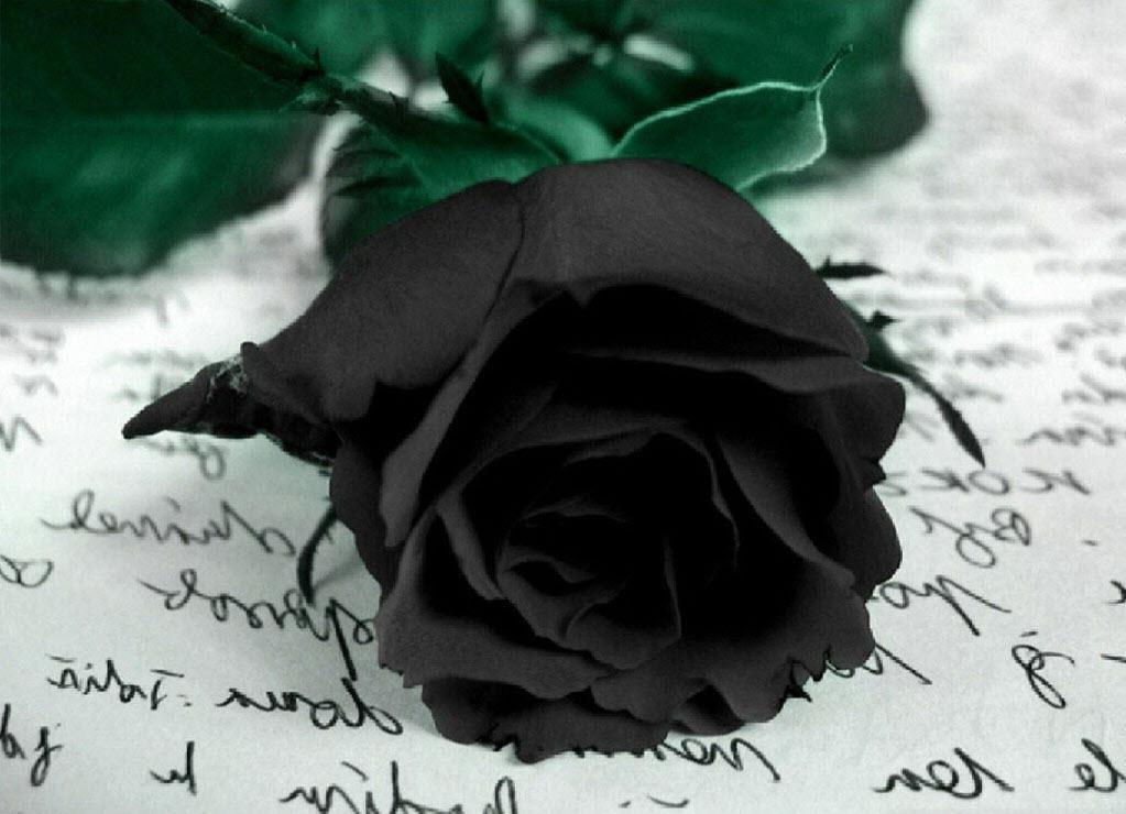 Ảnh hoa hồng đen buồn cực đẹp