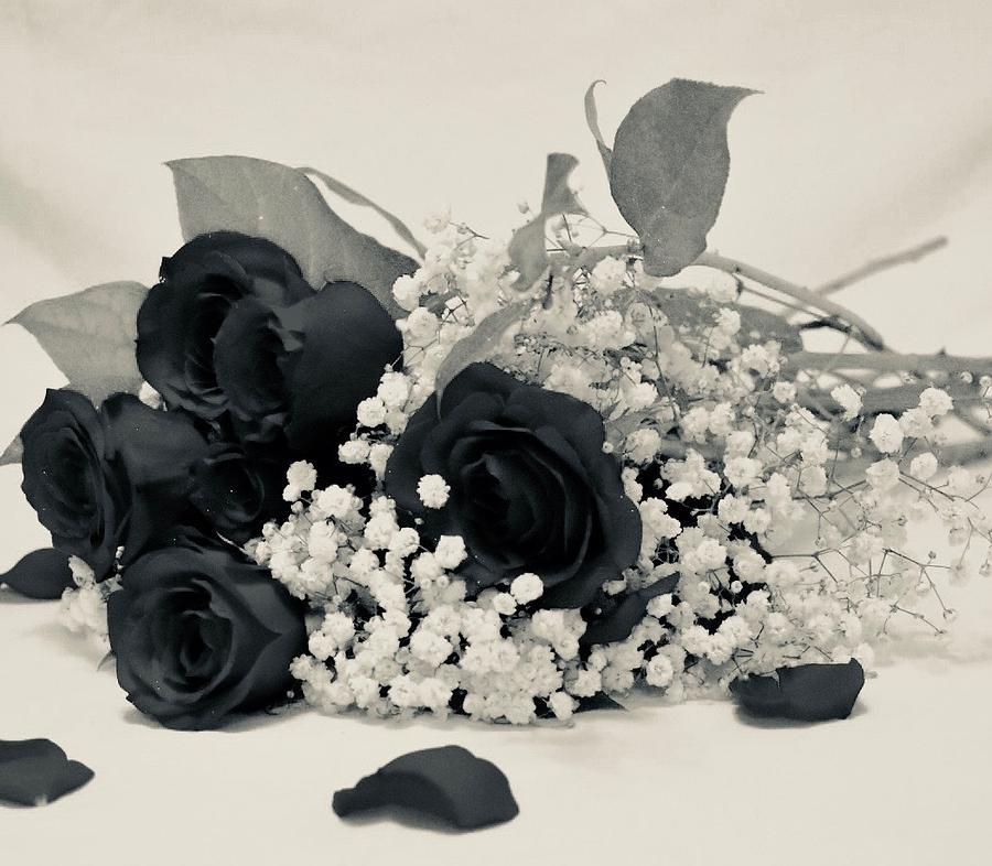 Ảnh hoa hồng đen buồn đẹp nhất