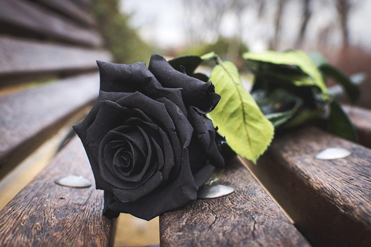 Hình ảnh hoa hồng buồn cực đẹp