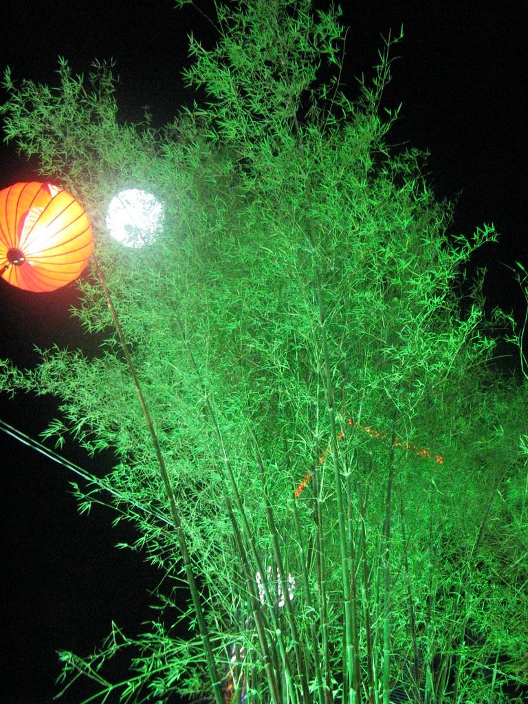 Bụi tre xanh và trăng sáng