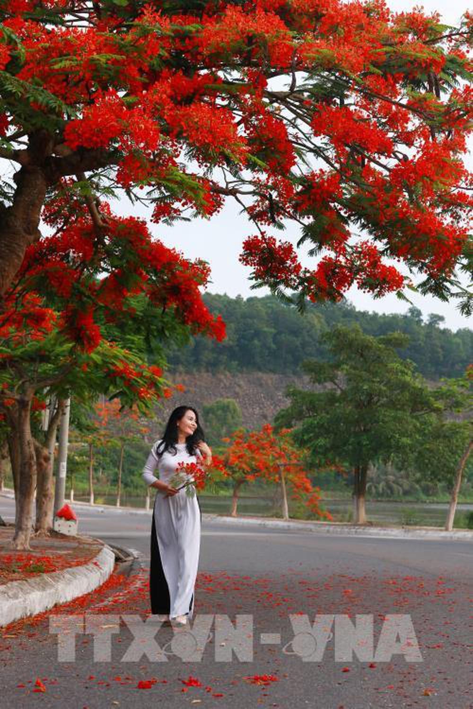Góc phố hoa phượng đỏ rơi