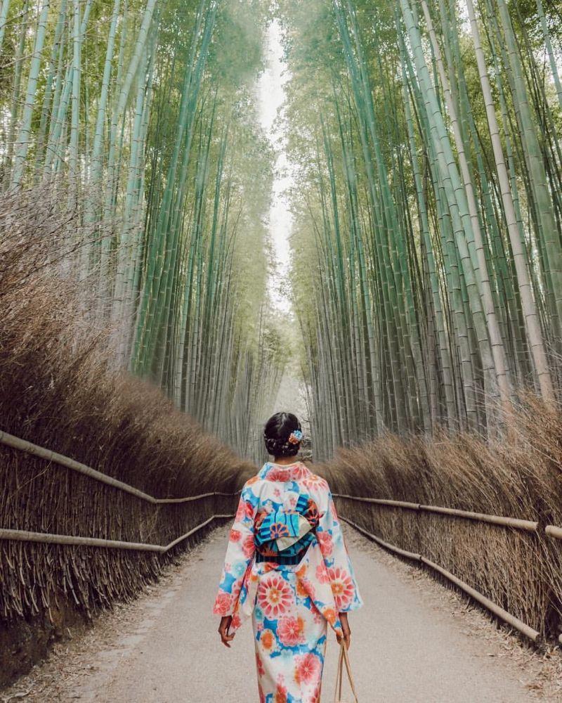 Hàng lũy tre và người phụ nữ mặc kimono