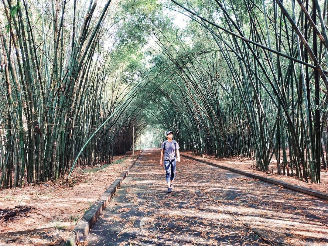Hình ảnh chàng trai đi bộ dưới những lũy tre