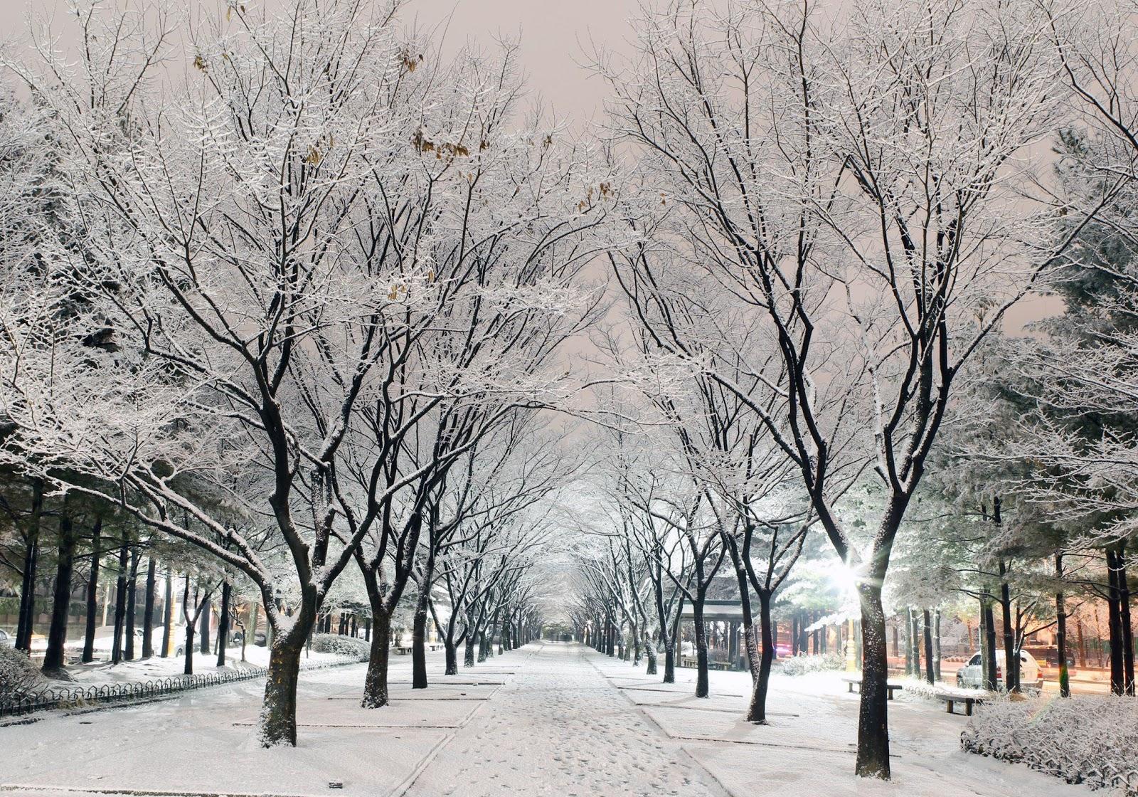 Hình ảnh con đường tuyết rơi cực đẹp